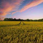 Come Aprire un'Azienda Agricola – Quanto Costa, Cosa Serve e Requisiti